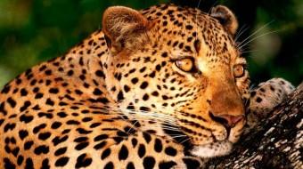 Viaje a Brasil. Cooperación. Conservación del Jaguar en la selva del Brasil