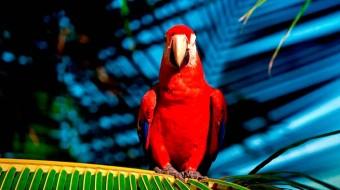 Viaje a Costa Rica sostenible. A medida. Especial FAADA