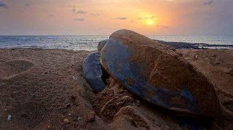 Viaje a Guinea Bissau. Viaje fotografico sostenible. Archipiélago Bijagos