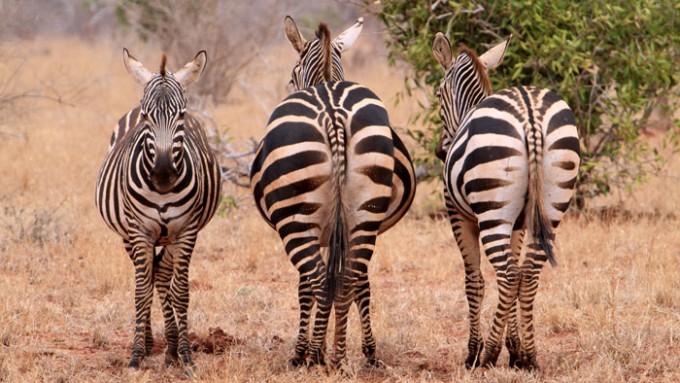Turismo sostenible África a medida