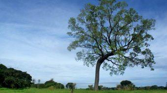 Viaje a Senegal y Gambia sostenible. Navidad. Tierra de Baobabs