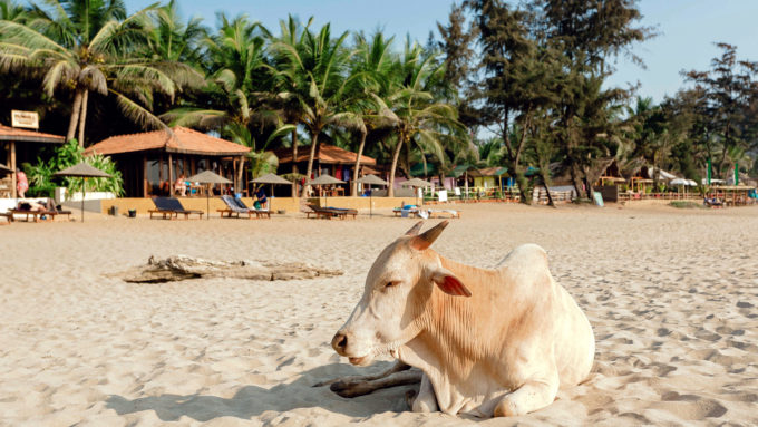 Viaje a India. Voluntariado. Comunidades locales de Goa