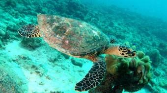Viaje de voluntariado en Seychelles. Bucea y explora
