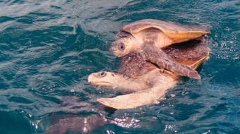 Viaje a Costa Rica. Voluntariado. Protección tortugas Carey