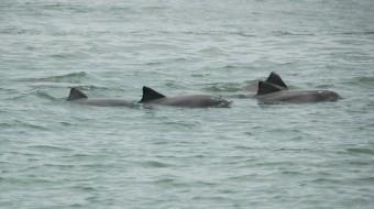 Viaje a Croacia. Voluntariado. Protección de delfines