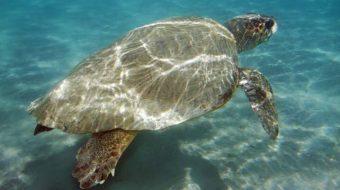 Viaje de voluntariado en Grecia. Buceo con las tortugas en Grecia